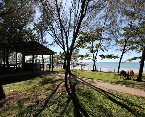 Balgal Beach-Dog-Friendly-Camping
