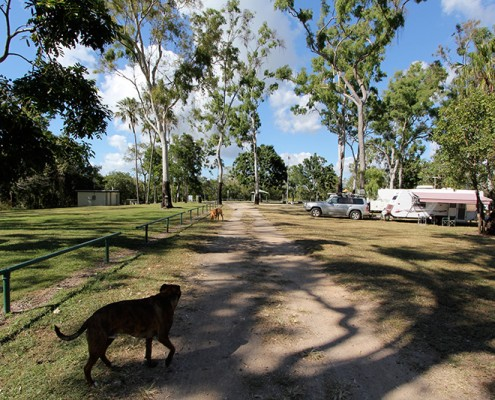 Dog-Travel-Camping-at-Toomulla-Beach-Queensland