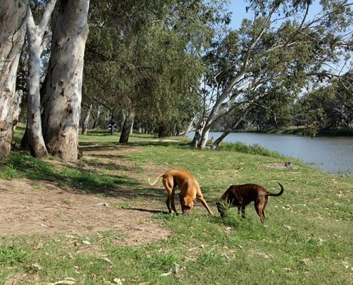 Dog-Travel-Fishermans-Rest-Mitchell