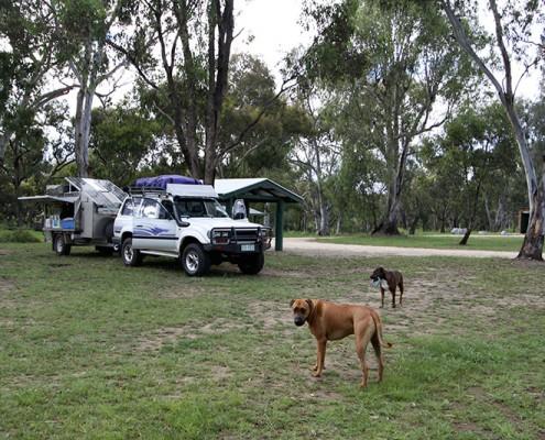 Dog-Travel-Friendly-Camping-at-Bundarra