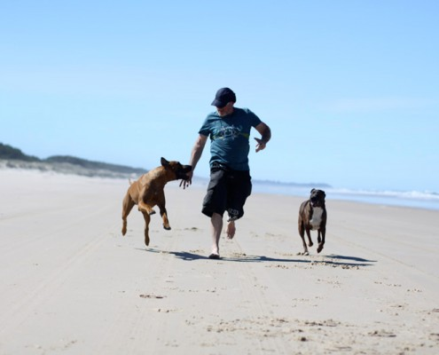Dog-Travel-Fun-at-Stradbroke-Island