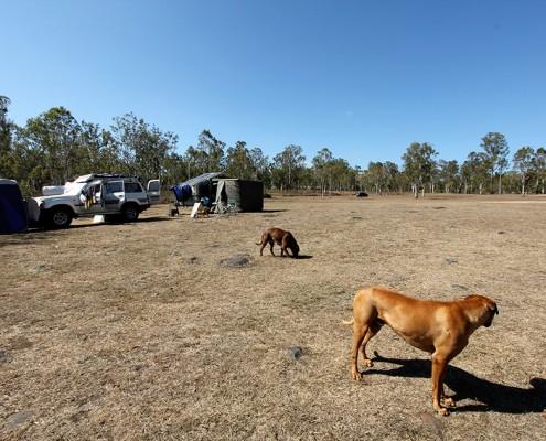dog-friendly-campsite-at-rocky-creek-queensland