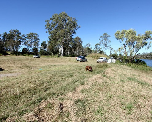 Calliope-River-Dog-Friendly-Camping