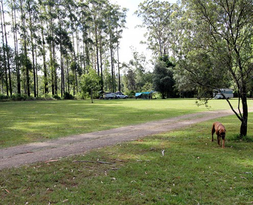 Coopernook-Dog-Travel-Friendly-Camping-Grounds