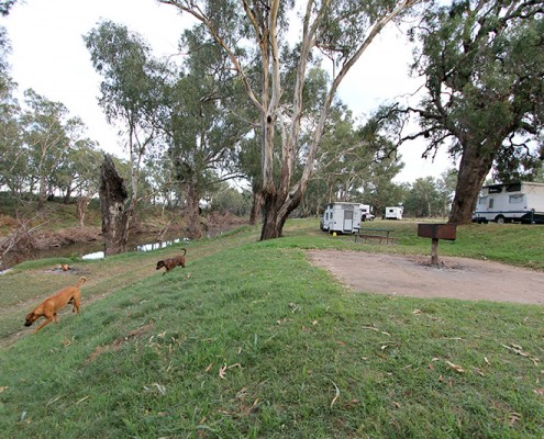 Dog-Travel-Camping-at-Terramungamine-Reserve-Dubbo