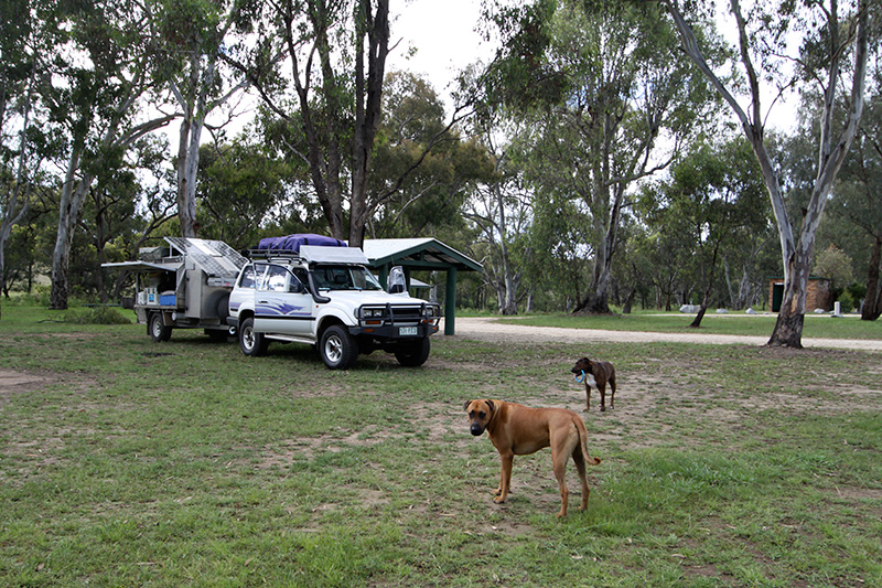 Dog-Travel-Friendly-Camping-at-Bundarra