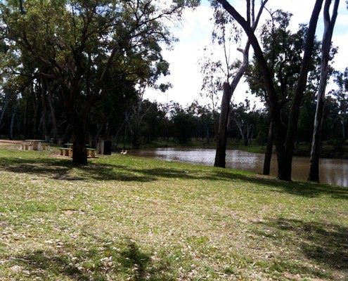 Dog-Travel-Friendly-Rest-Area-at-Judds-Lagoon-Yuleba