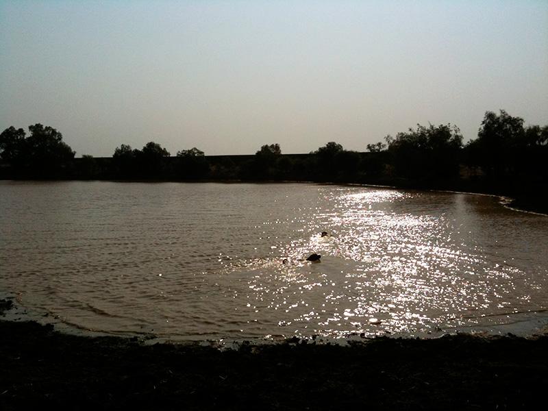 Dog-Travel-Fun-at-Winton-Waterhole