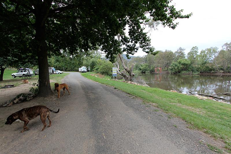 Dog Travel and Camping at Jingellic