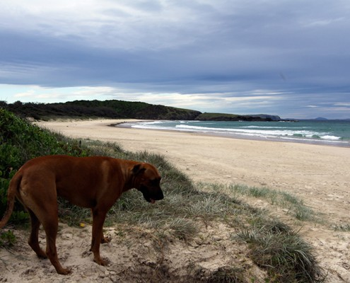 Dogs-Love-it-at-Goolawah