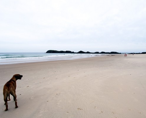 Goolawah-is-Great-for-Dog-Travel-and-Fun