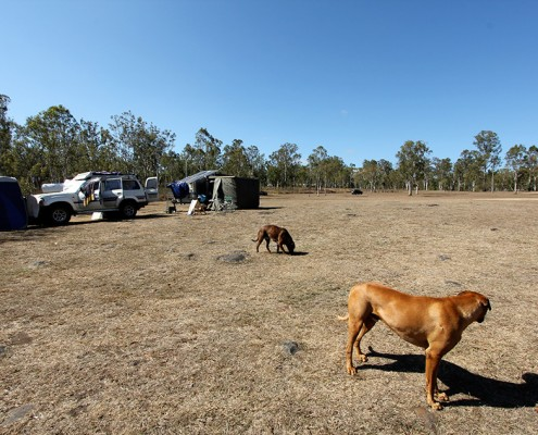 dog-friendly-campsite-at-rocky-creek-queensland
